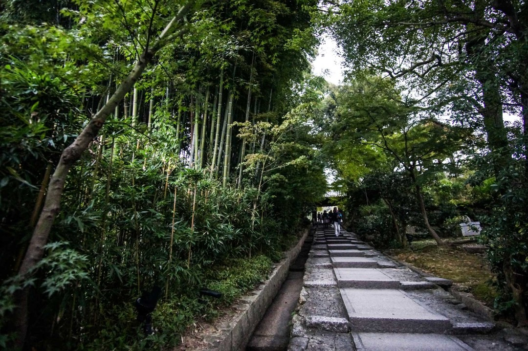bamboo-path-kyoto