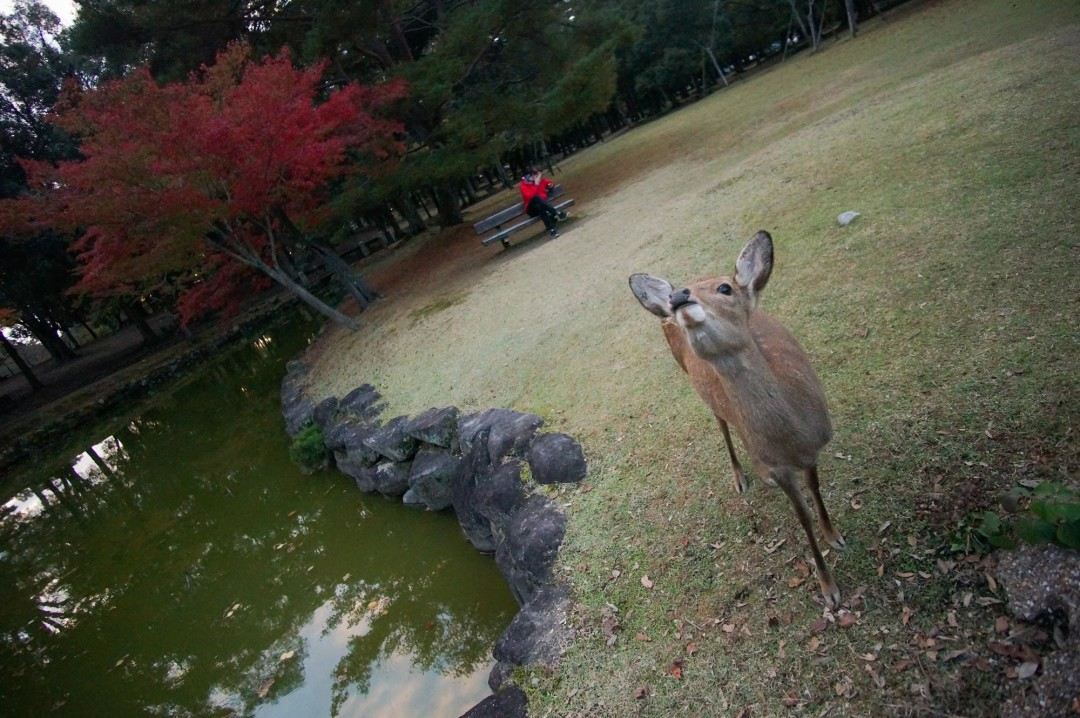 hello-beautiful-nara